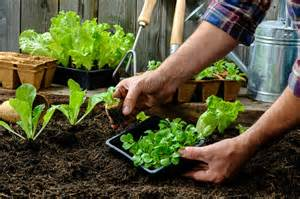Gardening In Your Guide To Starting A Vegetable Garden