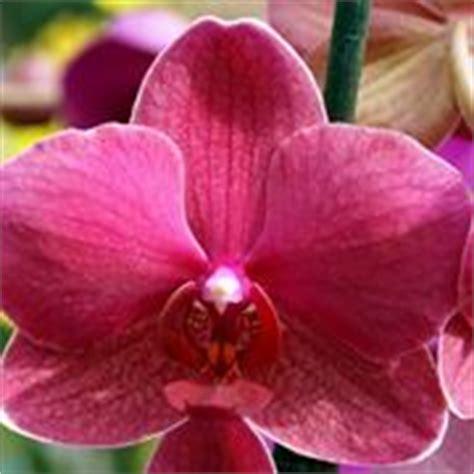 nomi derivano da fiore significato giglio linguaggio dei fiori