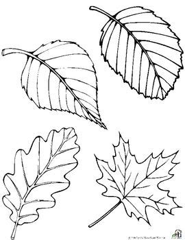 single leaf coloring page drawn stare template cut out 3451694
