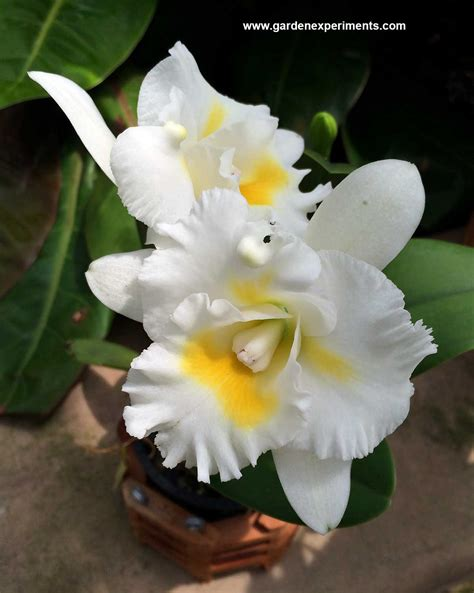 orchids facts amazing orchids facts and photos