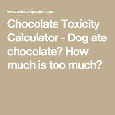 how much chocolate is toxic to dogs 1000 images about all things ok cats on beds houses
