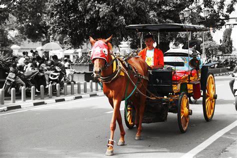 Sho Kuda Di Jogja andong dan sejarahnya moment kita