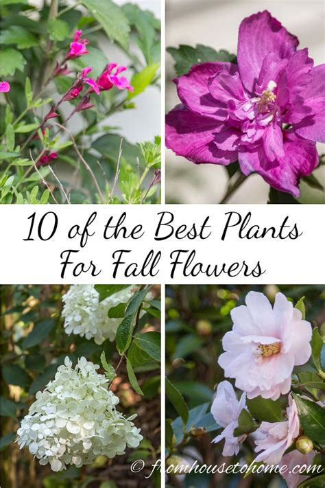 Best Planter Flowers by 10 Of The Best Plants For Fall Flowers