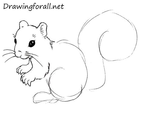 how to a for squirrel how to draw a squirrel drawingforall net