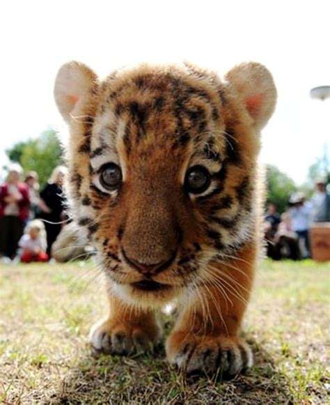Wild animals   Cute animal pictures and videos blog   Part 10