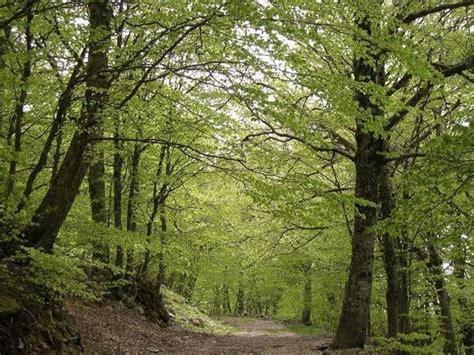 alberi per giardino alberi per giardino alberi