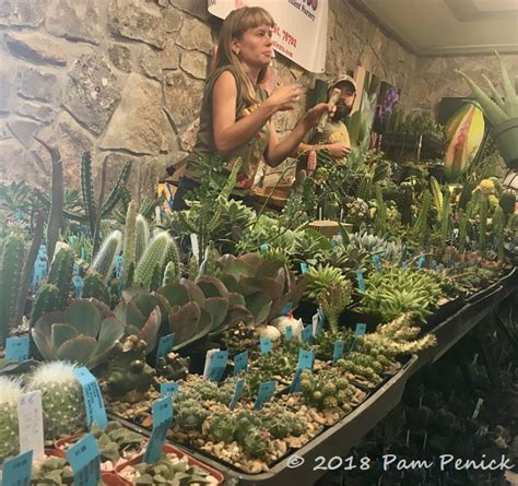 today    day  cactus  succulent sale