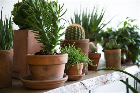 secrets  successful houseplants   experts