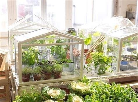 piccole serre da terrazzo serre da balcone piante da terrazzo come costruire