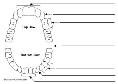 teeth diagram ks2 teeth unit plan by capital zab uk teaching resources tes
