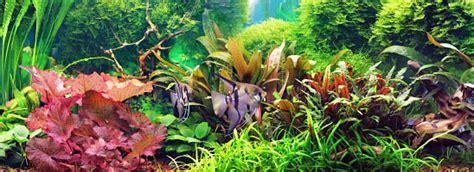 planted aquarium lighting guide saltwater aquarium plants