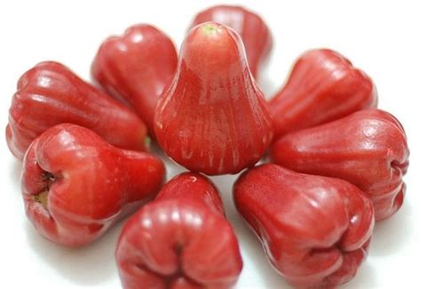 Jambu Air jambu air fruit