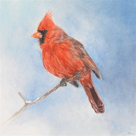 17 best images about cardinals on pinterest virginia