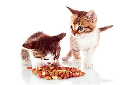 gattini alimentazione alimentazione gatti pagina 2 di 6 tutto ze