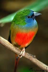 rainbow colored bird bird in rainbow colors wings