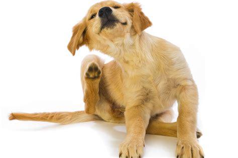 imagenes de animales jpg c 243 mo prevenir las pulgas y garrapatas