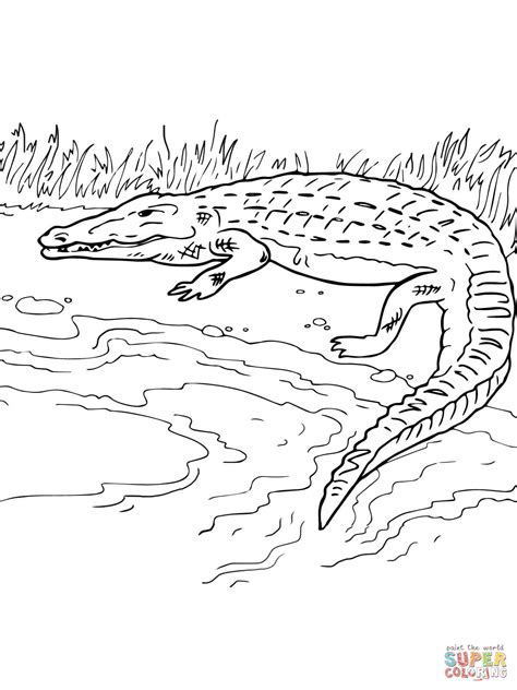 coloring page of the nile river crocodile on the river bank coloring page free printable
