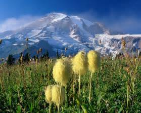 Mount rainier national park the most glaciated peak in the contiguous