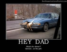 Funny deer car accident related images