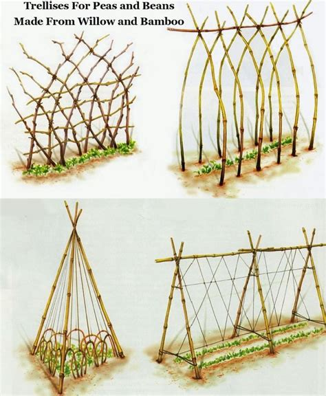 Runner Bean Trellis 25 best ideas about bean trellis on growing runner beans cucumber trellis and