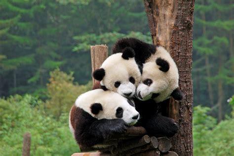 www panda panda penguin hummingbird everything you need