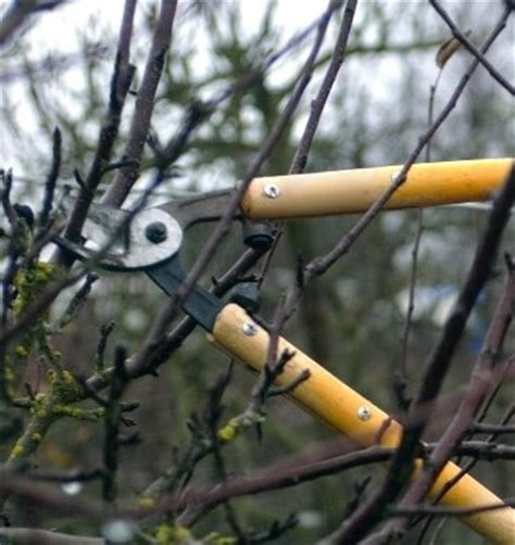 pruning fruit trees and raspberry bushes ready for the - Pruning Fruit Tree