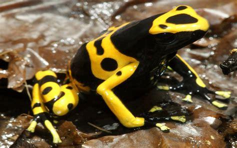 imagenes de animales venenosos los 5 animales mas peligrosos del mundo 2014 youtube