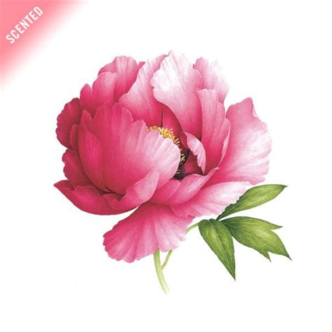 tattly designy temporary tattoos pink peony scented