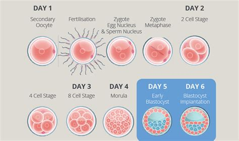 embryogen  blastgen culture media city fertility