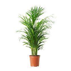 pots  plantes exterieur cache pots pour exterieur