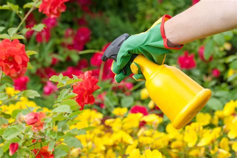 Garden Pesticides by Pesticide Application Timing When Is The Best Time To