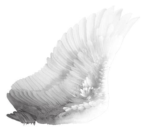 wings i wings png