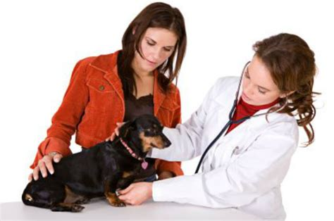 fluid in lungs dogs lung cancer in dogs fluid in lung causes blood clots in lungs warning signs