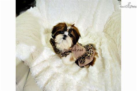 shih tzu rochester mn doberman puppies mn puppies puppy