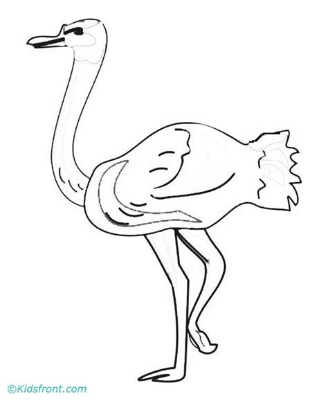 Ostrich Coloring Page Az Coloring Pages Ostrich Coloring Page