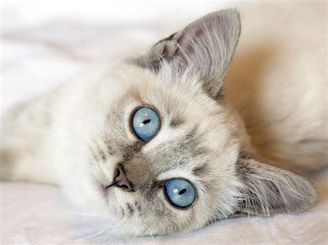 imagenes geniales de gatos c 243 mo hacer las mejores fotos de nuestros gatos mundogatos com