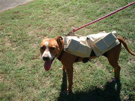 weight vest for dogs weighted vest related keywords weighted vest keywords keywordsking