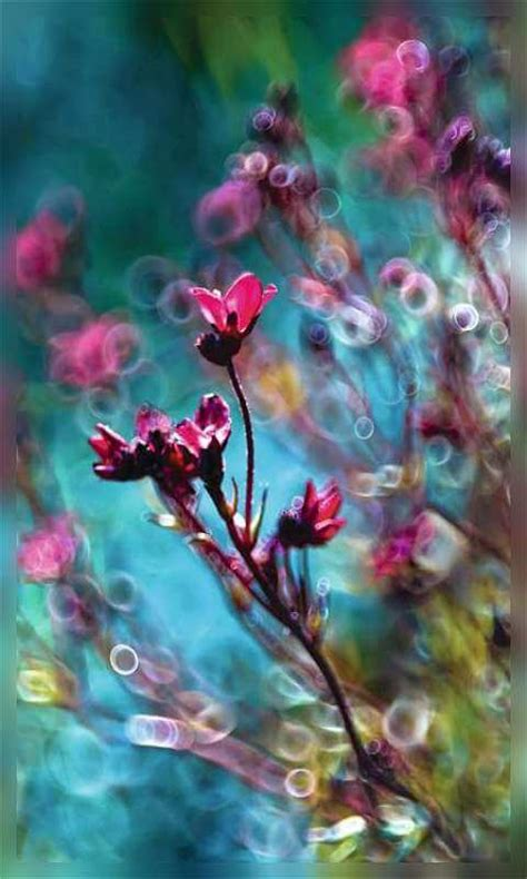 imagenes wallpaper flores cute wallpapers wallpapers and photography on pinterest