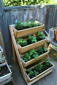 how to grow strawberries and a roped on cedar planter box