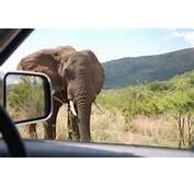 Pilanesberg National Park The Best And Closest Safari To Johannesburg