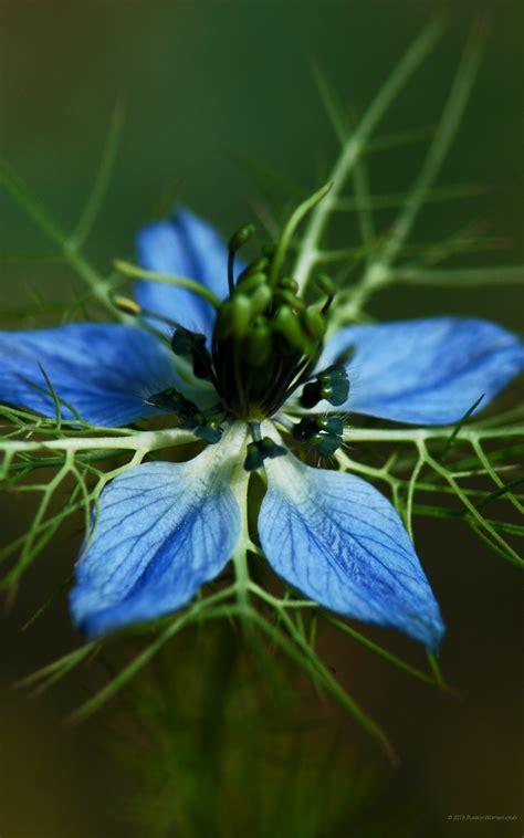 fiori per sfondo sfondi iphone fiori 81 immagini