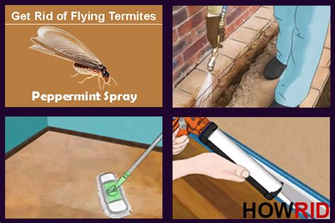 rid  flying termites winged termites