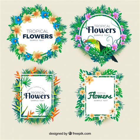 cornici fiorite imbusta le cornici fiorite tropicali scaricare vettori