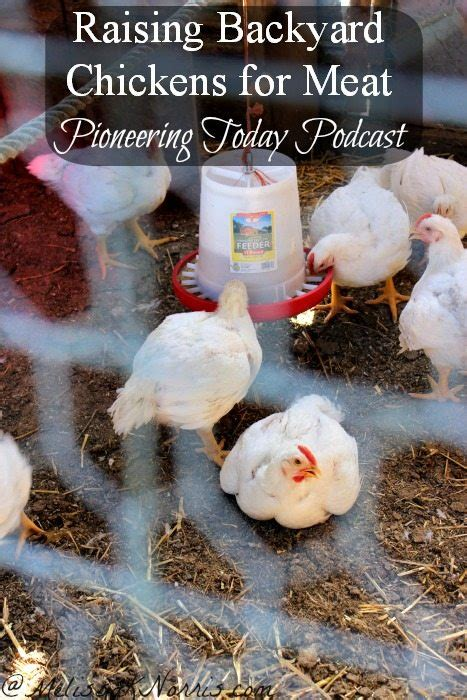 raising meat chickens your backyard raising meat chickens your backyard 28 images 5 things