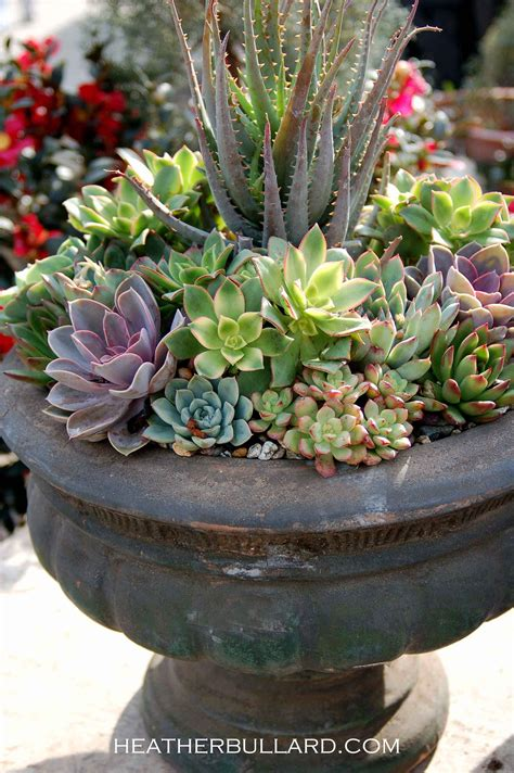 12 Amazing Succulent Arrangements Garden Nursery Succulent Planter Ideas