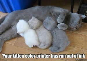 the color kittens cat ran out of toner