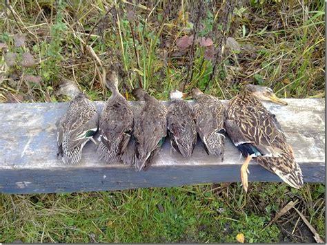 tableau de hutte la chasse au petit et grand marais de thennes