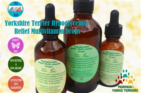 vitamins for yorkies yorkie hypoglycemia relief multivitamin drops 100 organic superfood