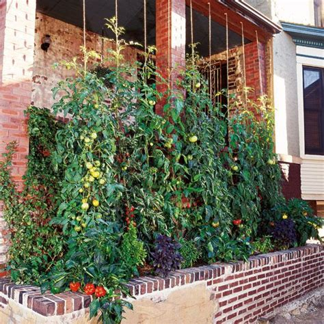 Tomato Planter Ideas by 25 Best Ideas About Staking Tomato Plants On