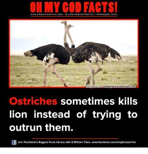 Ostrich Meme - 25 best memes about ostrich ostrich memes